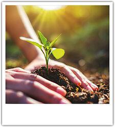 Setzling Baum pflanzen