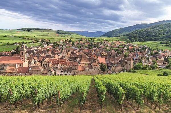 Kaiserstuhl und Elsass – die badische Weinstraße
