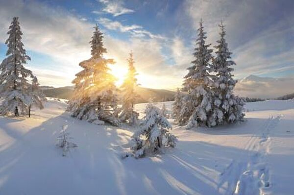 Bayerischer Wald im Winterzauber