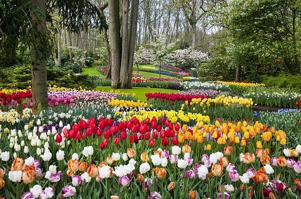 Holland zur Tulpenblüte mit Besuch des Keukenhofes
